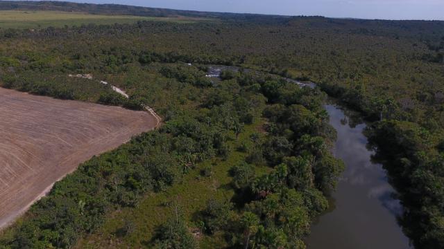 Fazenda Dona Nina - Tocantins